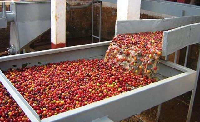 常见的几种咖啡豆处理方法
