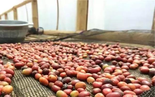 这些事实告诉你说国产圆豆不如印尼公豆只是偏见